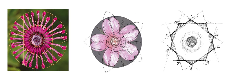 Geometric Flower Development