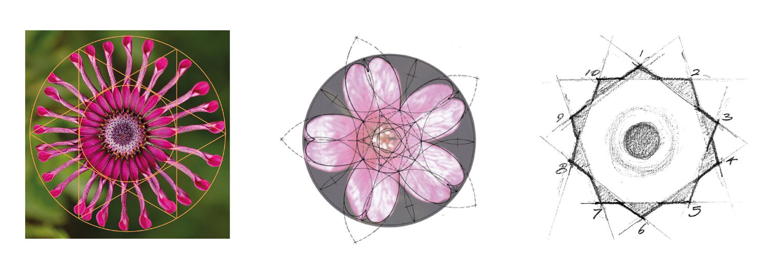 Geometric Flower Development